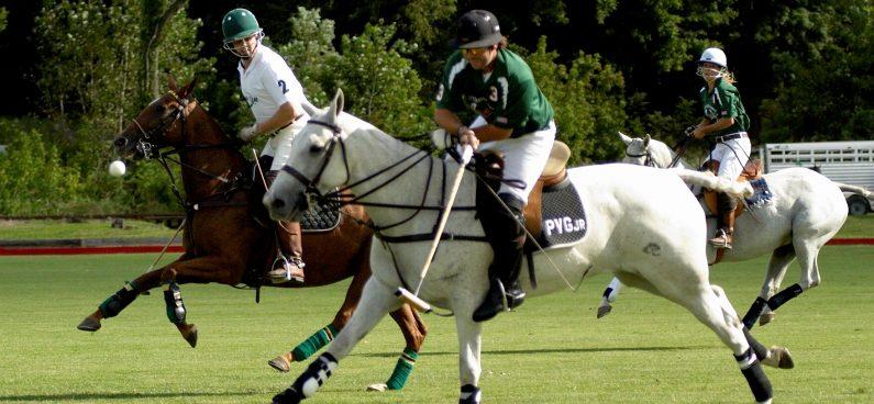 argentina polo pony