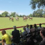 poloday-buenos-aires