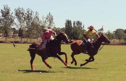 behavior of a horse