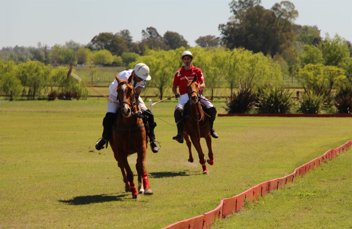 Horses exercises