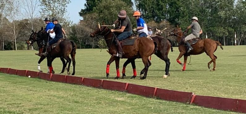 polo players in a grass field